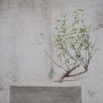 """许志锋,""""人工石榴,"""" 综合材料装置,石榴树,土壤,铁网,水泥,30 x 40 x 30, 2013"""